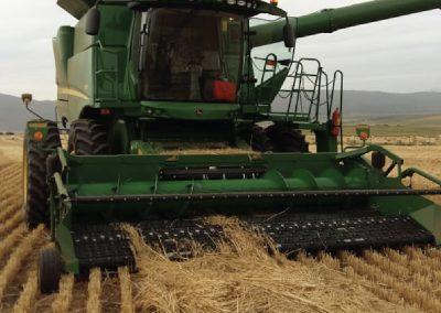 Dasberg Crops-45