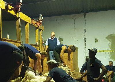 Dasberg Livestock 1