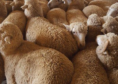 Dasberg Livestock